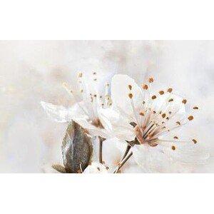 Голден Тайл Sakura В61411