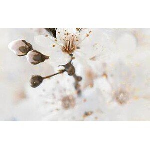 Голден Тайл Sakura В61421